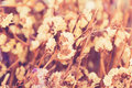 Dried flower vintage color background Royalty Free Stock Image