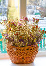 Dried flowers in a basket on a window against winter background bouquet Stock Photos