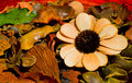 Dried Flowers and Fruits Composition