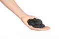 Dried fruits and cooking theme: man's hand holding a black Dried prunes isolated on a white background in studio Royalty Free Stock Photo