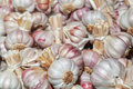 Dried garlic. Royalty Free Stock Photography
