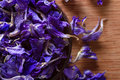 Dried larkspur petals closeup on blue alternative medicine pot pourri decoration wedding confetti copy space Royalty Free Stock Images