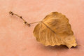 Dried leaf close up of Royalty Free Stock Images
