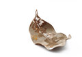 Dried leaf Royalty Free Stock Photo