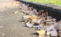 Dried leaves on the road and pavement, concept for background te