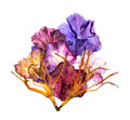 Dried lily petals. Petunia flower Royalty Free Stock Photo