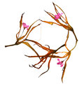 Dried lily petals and pressed flowers Royalty Free Stock Photo