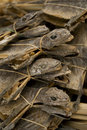 Dried lizards in market singapore asia Royalty Free Stock Photos