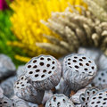 Dried lotus pods gray red yellow green flowers nature outdoor Royalty Free Stock Photo