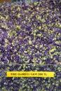 Dried Malva siylvestris petals, herbal tea Royalty Free Stock Photo