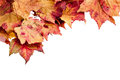 Dried maple leaves border isolated on white Royalty Free Stock Photo