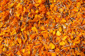 Dried marigold flowers (tagetes) Royalty Free Stock Photo