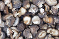 Dried mushrooms Stock Image