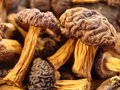 Dried mushrooms Royalty Free Stock Image