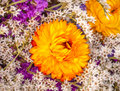 Dried Orange Flower Baby's Breath Blooming Royalty Free Stock Photo