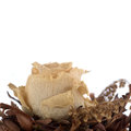Dried out rose Royalty Free Stock Photo