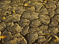 Dried out soil crust with cracks and yellow leaves on it lit by the low standing sun Stock Photo