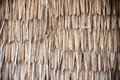 Dried palm texture Stock Images