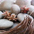 Dried plants zen pebble background Royalty Free Stock Photos