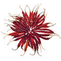 Dried red chili pepper isolated on white Royalty Free Stock Photo