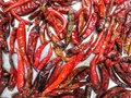 Dried red chilli thai texture background Royalty Free Stock Photo