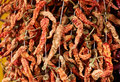 Dried red peppers chilli on edirne market turkey very hot Royalty Free Stock Photography
