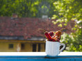 Dried red peppers in a cup at the window with view towards garden Stock Photos