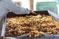 Dried ring banana chips. Royalty Free Stock Photo