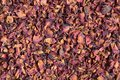 Dried rose petals close up can be used as a background Royalty Free Stock Photo