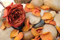 Dried rose and stone Stock Image