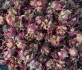 Dried roselle fruits background from Stock Images