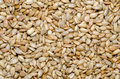 Dried And Salted Sunflower Seeds Stock Photography