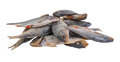 Dried salty fishes Stock Photos