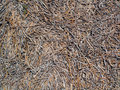 Dried sea grass a pile of Royalty Free Stock Image