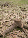 Dried soil Stock Photography