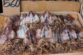 Dried squids in thailand for sale the market Royalty Free Stock Photography
