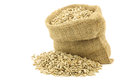 Dried sunflower seeds in a burlap bag Royalty Free Stock Photo