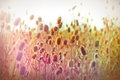 Dried thistle burdock thistle field autumn in a of Royalty Free Stock Photo