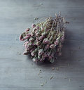 Dried thyme bunch of with flowers Stock Photos