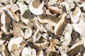 Dried white fungus in a pile Stock Photos