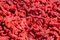 Dried Wolfberry or Goji berries, Chinese Herbal healthy food source of Vitamin C Royalty Free Stock Photo