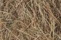 Dries hay. Royalty Free Stock Photo
