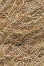 Dries hay Royalty Free Stock Photo
