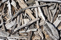 Drift wood Royalty Free Stock Photo