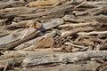 Driftwood Stock Photos
