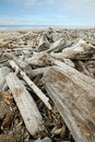 Driftwood on beach Stock Image