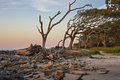 Driftwood beach jekyll island ga at dawn sunrise on on in the golden isles of the georgia coast sheds a golden light on the rocks Royalty Free Stock Image
