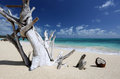 Driftwood Coconut Sandy Beach Turquoise Ocean Hawaii Royalty Free Stock Photo