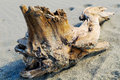Driftwood image of on the sand beach Royalty Free Stock Photography