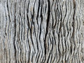Driftwood Macro Royalty Free Stock Photo